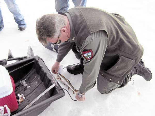 010: Game Warden Rick Clowry measures a splake Saturday, Jan. 1, 2011, on Wyman Lake in central Somerset County. Clowry said the primary motivation behind his profession is to protect fish and game so it will remain abundant for future generations. (Bangor Daily News/Christopher Cousins)