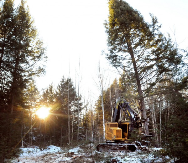 A feller buncher with W. T. Gardner Logging Co. harvests softwood trees in Chester Tuesday afternoon, January 4, 2011.  Operator Gary Martin said that except for a few wet spots the ground has been solid enough to cut wood due to the recent cold weather.  The company crews have been cutting wood for the past two months but only been able to work half that time because of the wet and warm conditions. (Bangor Daily News/Gabor Degre)