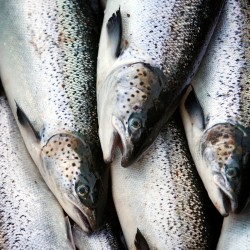 Salmon facility reopening called 'shot in the arm'