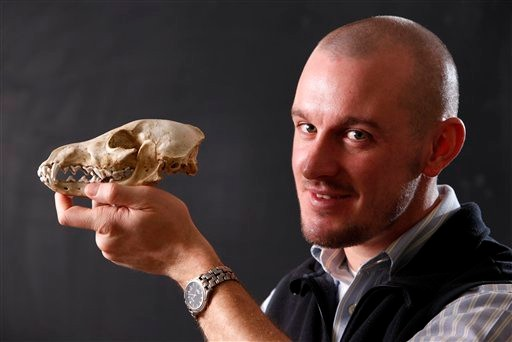 Researcher Samuel Belknap III poses with a skull of a domestic dog, Friday, Jan. 14, 2011, at the University of Maine in Orono.  Belknap found a bone fragment of what he says is the oldest-known domesticated dog in North America, while examining a waste matter recovered from Hinds Cave, a major archeological site in southwest Texas near the Mexico border. A carbon-dating test pegged the age of the bone at 9,400 years old. (AP Photo/Robert F. Bukaty)