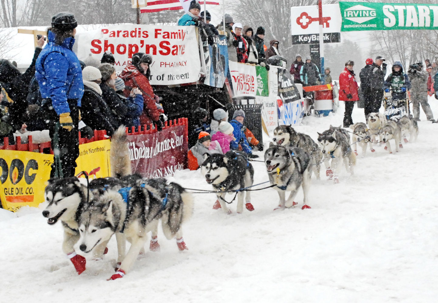 Jaye Foucher of Ashland, N.H., takes off down the start chute during her 2008 run of the Irving Woodlands Can Am Crown 250-mile sled dog race in Fort Kent. This year Corey Nutrition, maker of Inukshuk dog food in Fredericton, New Brunswick, is donating 1 pound of dog food for every dog participating in the 2011 race to be used as the required emergency food the mushers must carry in their sled bags.
