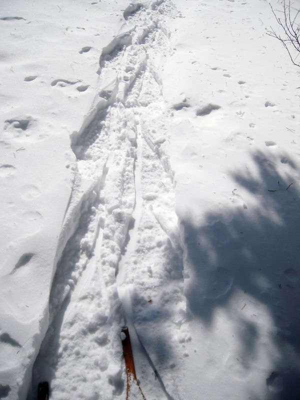 I place the wide toe of my snowshoe into the snow left by its narrow tail.