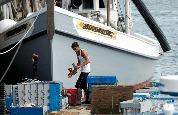 Adrick Roscoe of Live Lobster Co. works on the Rockland Municipal Fish Pier in August 2010, where he buys lobster from fishermen and sells them bait. The company, which is based in Chelsea, Mass., has agreed to buy the former Stinson Seafood plant in Prospect Harbor to be used to buy and sell lobnster and also set up a lobster processing plant, which is expected to create 120 jobs within two years.