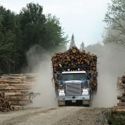 Logging companies cited for foreign equipment