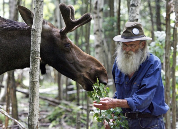 Pete the Moose is seen with David Lawrence in Irasburg, Vt., in July 2009. Vermont lawmakers are reconsidering their adoption last year of a bill that pardoned Pete the Moose but also set a precedent some wildlife advocates think was improper.