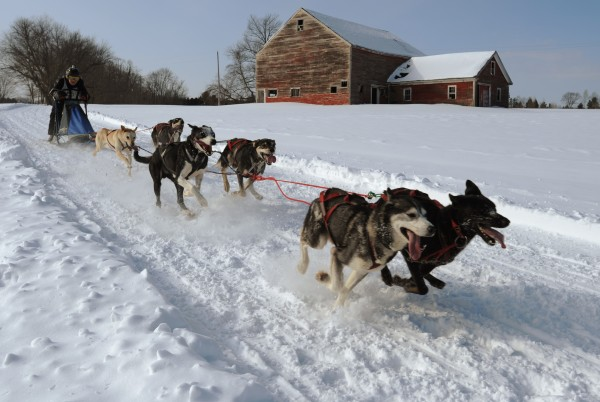 A competitor races her sled dog team along a looped trail near Sebasticook lake in Newport on Sunday, Feb. 27, 2011 during the David D. Merrill Memorial Sled Dog Race.