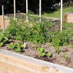 Looking ahead: Tips on planning your first vegetable garden