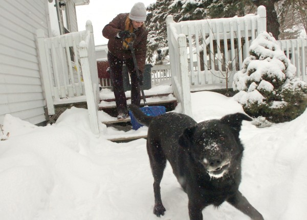 As her dog Bella plays in the snow, Misty Wilson of Bangor shovels the steps of her Forest Avenue residence on Wednesday. &quotI try to go out every hour, so it doesn't pile up,&quot Wilson said of her shoveling strategy.