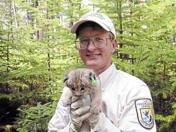 Mark McCollough, a biologist with the U.S. Fish and Wildlife Service, drew the designs for Maine's chickadee and loon license plates.