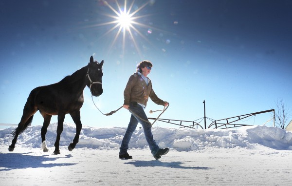 Elva Harrison of Poland walks one of six horses that got loose from the Puf and Pas Stable in Mechanic Falls back to their barn Thursday afternoon. When stable owner Kenny Sumner was at work, the race horses somehow got the gate opened and ran off.