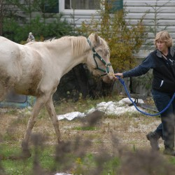 Trial begins for woman accused of horse cruelty