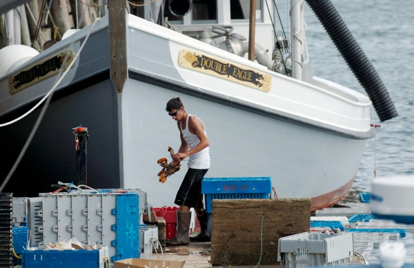 Adrick Roscoe of Live Lobster Co. works on the Rockland Municipal Fish Pier where he buys lobster from fishermen and sells them bait. The company is based in Chelsea, Mass.
