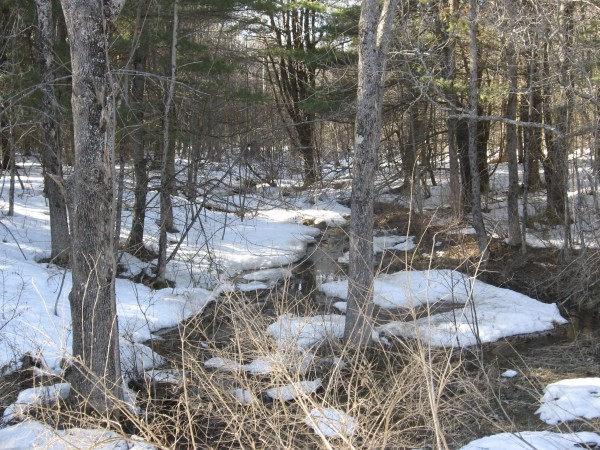 A warm March afternoon frees up a woodland stream on Marsh Island.