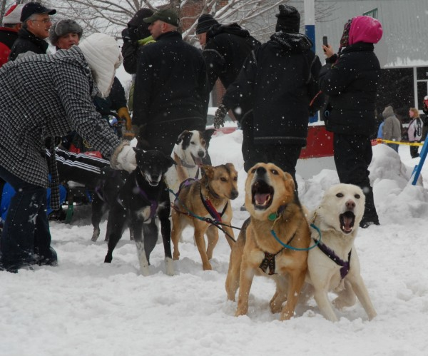 Close to 80 mushers and their teams of huskies took part at the starts of the Can Am Crown 30, 60 and 250-mile races Saturday, March 5, 2011, in Fort Kent.