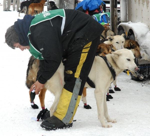 Can Am Crown 250 musher Rene Marchildon of South River, Ontario, boots his team before the start the race Saturday in Fort Kent.