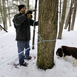 Sugarhouses open for Maine Maple Sunday, producers predict a banner year
