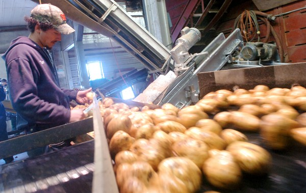 Tim Mooerf examines potatoes at Crane Bros. Inc. farm in Exeter in 2009