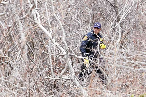 Emergency personnel search the thick brush on the side of the road near Oak Beach, N.Y., Monday, April 4, 2011. Searchers perched in fire truck bucket ladders Monday scanned dense, tick-infested undergrowth Monday in a search for more victims of a possible serial killer near where five sets of human remains have been found.