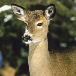 Spruce Mountain students ask lawmakers to allow youth hunters to shoot antlerless deer