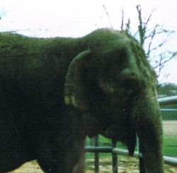 Circus elephant barred from Maine after testing positive for tuberculosis antibodies