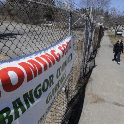 Group selects site for proposed Bangor dog park