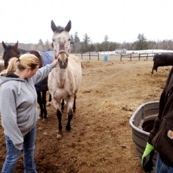 Clinton horse farmers convicted of 6 animal cruelty counts