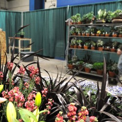 Planners throw in trowel on garden show