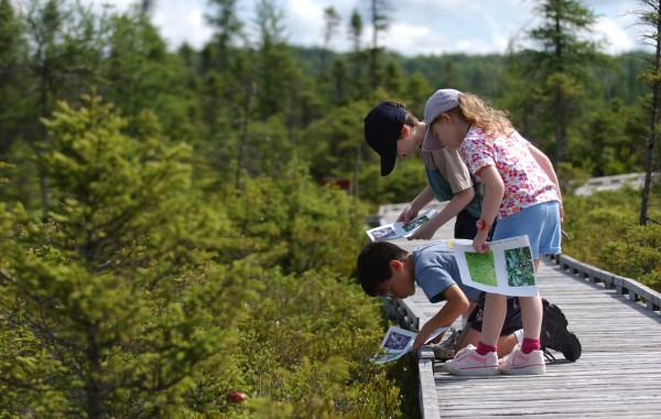 Brandon Woo (kneeling), Madeline Marks and her brother Jamie match pictures of bog plants with the real plants along the Orono Bog Boardwalk in 2005.
