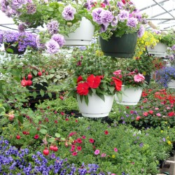 Ellis' Greenhouse and Nursery in Hudson is one of more than three dozen businesses participating in the second Maine Greenhouse and Nursery Day on Saturday. Visit www.plants4maine.com for a complete list.