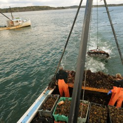 Maine aims to build sustainable urchin fishery