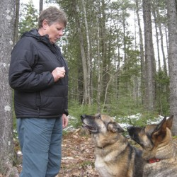 Jennifer Fisk commands her two search and rescue dogs Freya, left, and Fran, right, to sit. They are certified rescue dogs with Maine Search and Rescue Dogs, a volunteer organization that conducts wilderness searches for the Maine Warden Service in Maine.