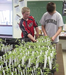 Wiscasset Primary School students plant Thanksgiving-theme garden