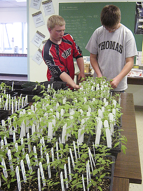 Students Jontylar Weeks and Cass Carr transplant heirloom tomatoes in preparation for The Morris Farm Plant Sale Saturday, May 21.