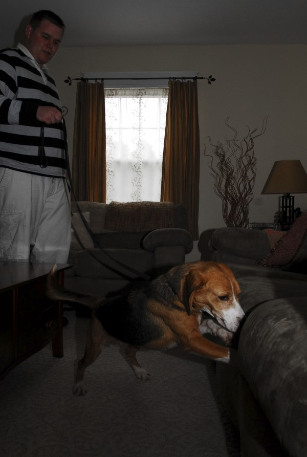 Dog handler Anthony Silva trains bedbug-sniffing beagle Sherlock, who is alerting on some hidden vials of the pests, in Westbrook on May 16, 2011.