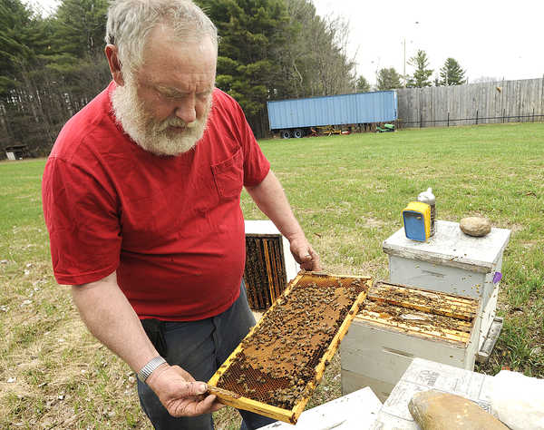 Beekeeper Tony Bachelder of Buckfield looks over one of his hives on Thursday. Bachelder says he has been losing bees due to a chemical used on some crops.