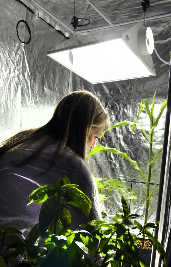 Melainie Baxter looks at the portable grow room that Ray Logan set up during the second Marijuana State University medicinal marijuana grow class at the Fireside Inn in Auburn on Saturday afternoon. Baxter came from Kennebunk with her husband, Cliff, who is undergoing chemotherapy and the couple were looking for tips on how to grow marijuana.