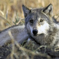 USDA's Wildlife Services killed 4 million animals in 2013