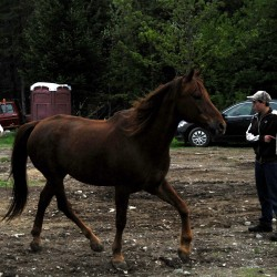 Lee horse rescuer prepares for long, tough winter by adding space