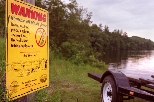 Warning signs about invasive plants have been placed at boat launches on Megunticook Lake.
