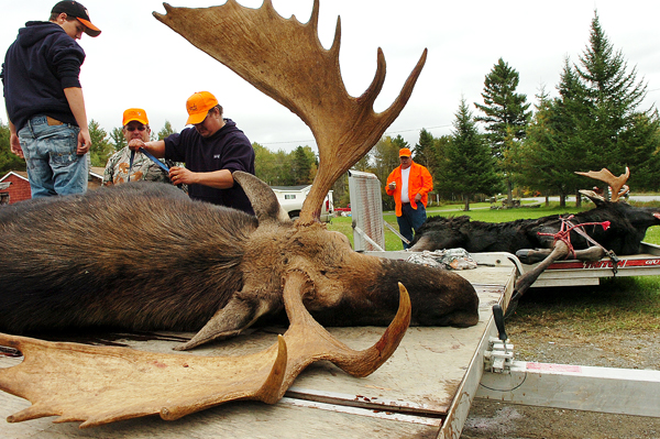 Nicholas Barnes (left), 15, his uncle John Cox and father, Billy Barnes, all of Edmunds, help secure Cox's 793-pound bull moose after it was tagged and weighed at Gateway Variety in Ashland in September 2010.