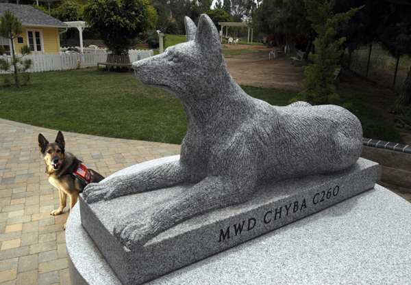 Chyba,  a 12-year-old former military dog who served in Iraq with the Army, poses in behind a military working dog monument crowned with her likeness in stone, at the Rancho Coastal Humane Society in Encinitas, Calif. Madeleine Pickens, wife of billionaire T. Boone Pickens, adopted her dog, Chyba, last year. War dog organizations say the number of inquiries from people asking about military working canines has risen dramatically.