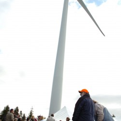 Vinalhaven wind turbines kill fewer than 10 birds yearly, study says