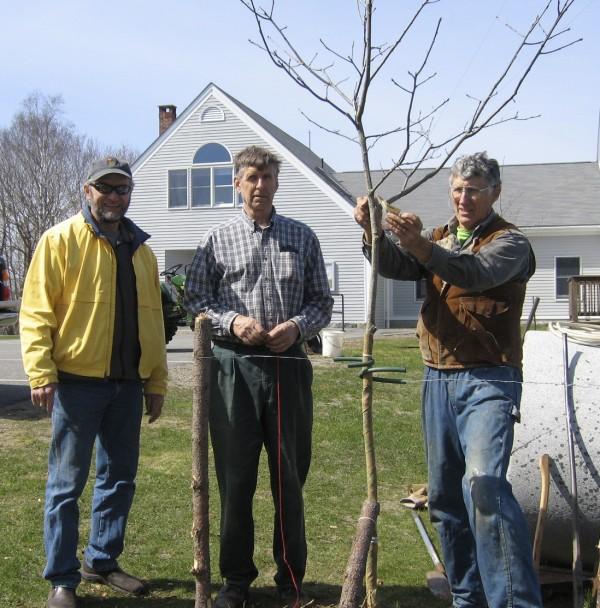 In honor of the community and Earth Day, two native red oak trees, which could live well into the 25th century, were planted recently in front of the St. George Town Office. Planting was done by (from left) Skip Bracy, Joss Coggeshall and Leslie Hyde on behalf of the St. George Conservation Commission.