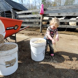 Rockport farm animals inspire awe in children