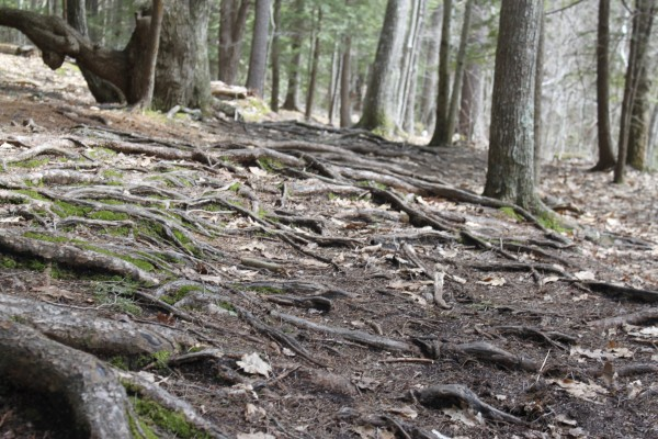 Bradbury Mountain State Park in Powell has a network of color-coded trails (easy to moderate) surrounded by 800+ acres of forested land. Maps are available at the park entrance.