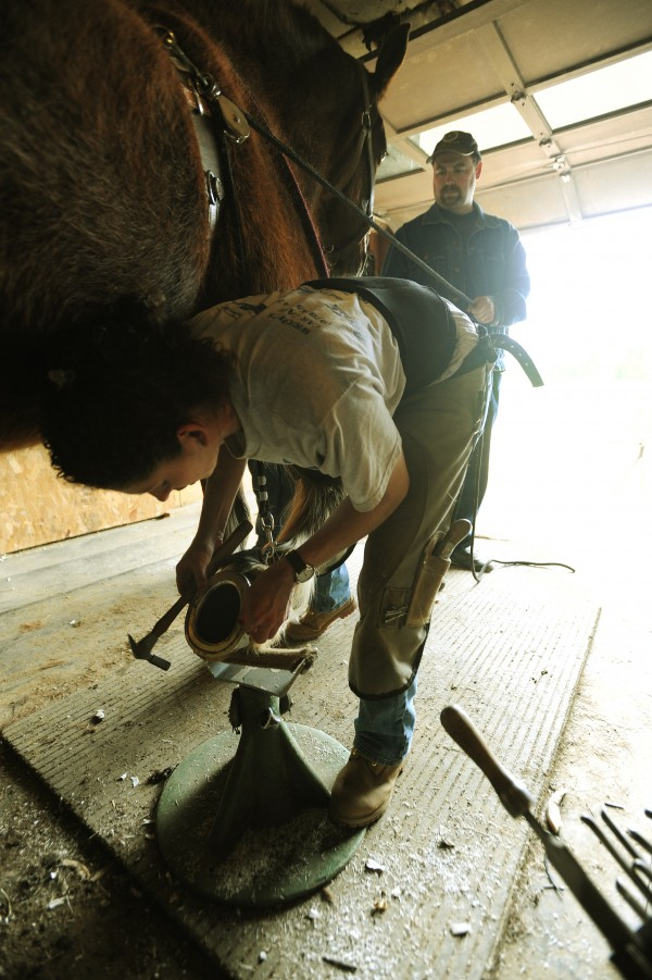 Horse farrier Kathrine Horesy fits an aluminum shoe on Zeke a Throughbred Clydesdale mix at Spirit of Hope horse rescue farm in Winterport on Thursday, May 12, 2011. With Horesy is co-owner Jess Wincester.