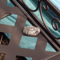 A toad rests on the bottom shelf of the potting bench in the new popup greenhouse.