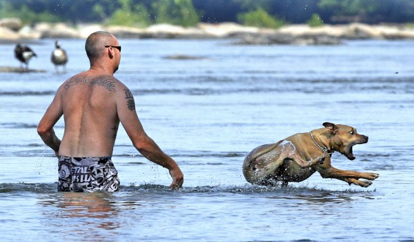 A dog lands in the cooling waters of the James River after being gently tossed in by her owner, left, just east of the Boulevard Bridge in Richmond, Va., Thursday, June 9, 2011.