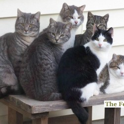Beals Island woman cares for 15 feral cats