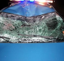 Aroostook County trooper escapes serious injury in moose collision